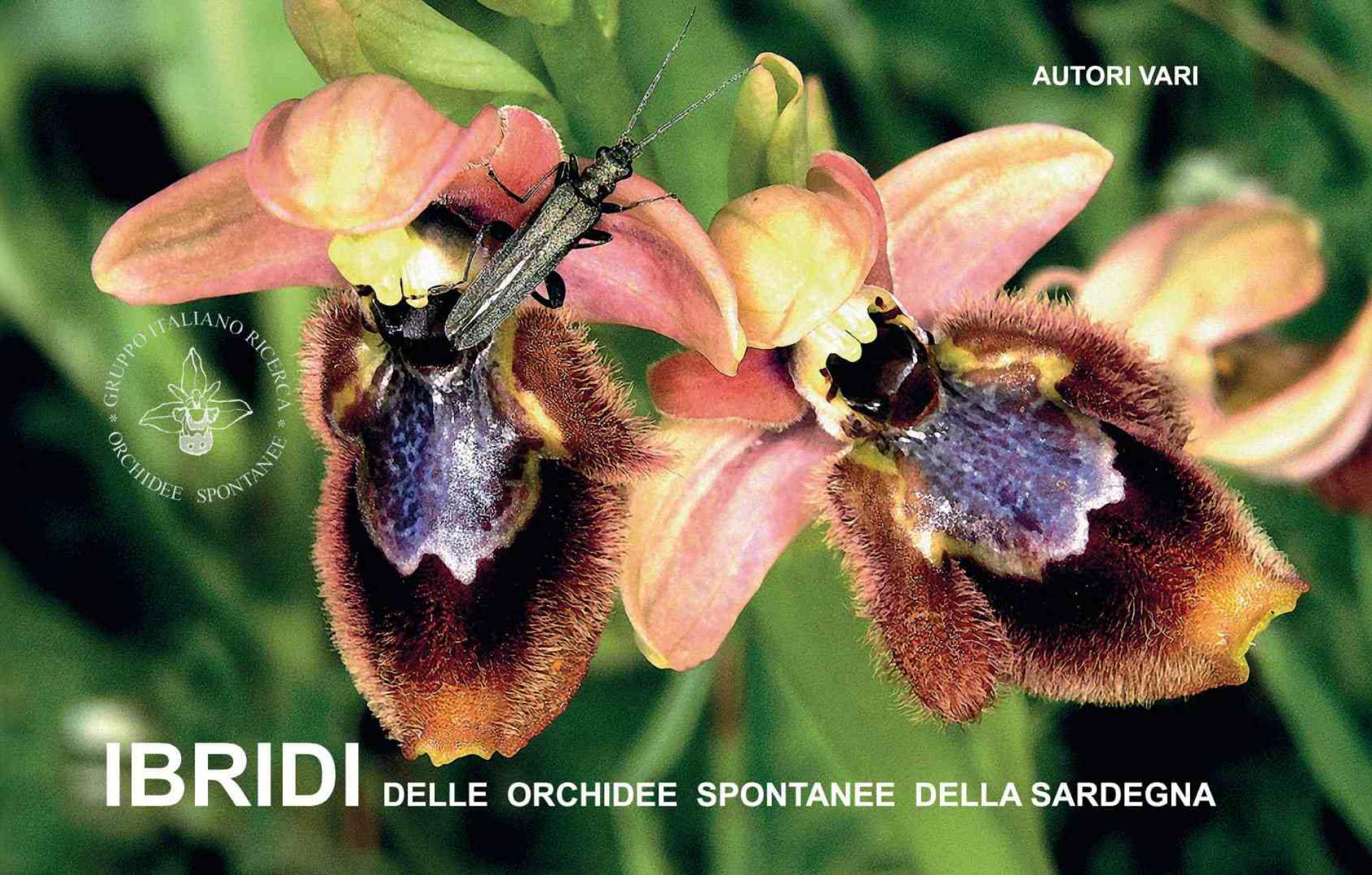 IBRIDI delle orchidee spontaneedella Sardegna