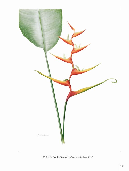 8/ - Arte botanica nel terzo Millennio. Botanical Art into the third Millennium <br>catalogo